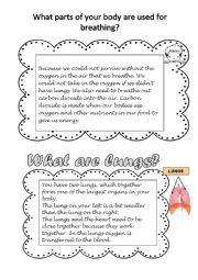 English Worksheet: Respiratory System