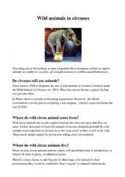 Wild animals in circuses