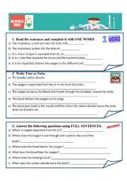 English Worksheet: Respiratory system quiz