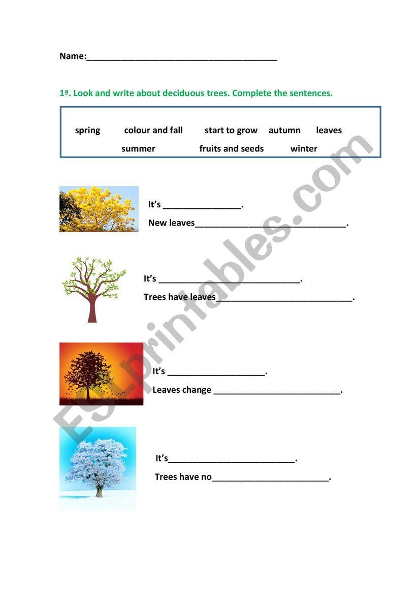 deciduous trees worksheet