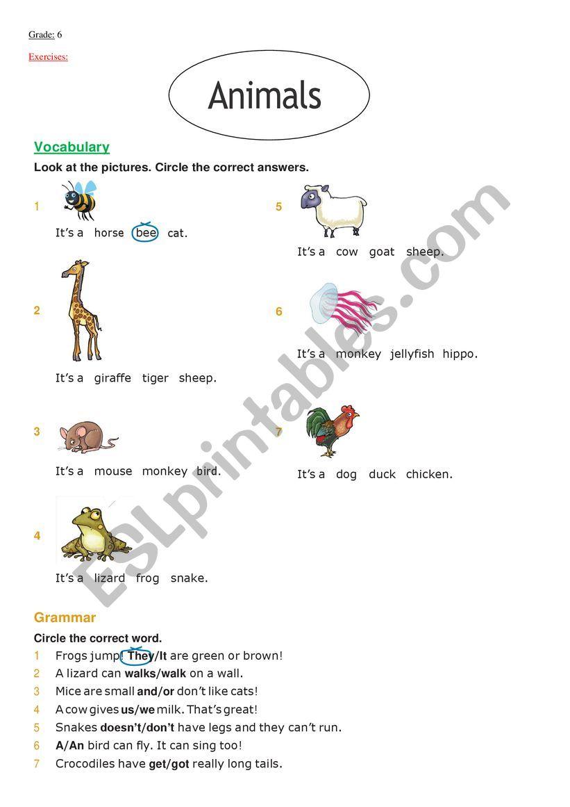 animals + present simple worksheet
