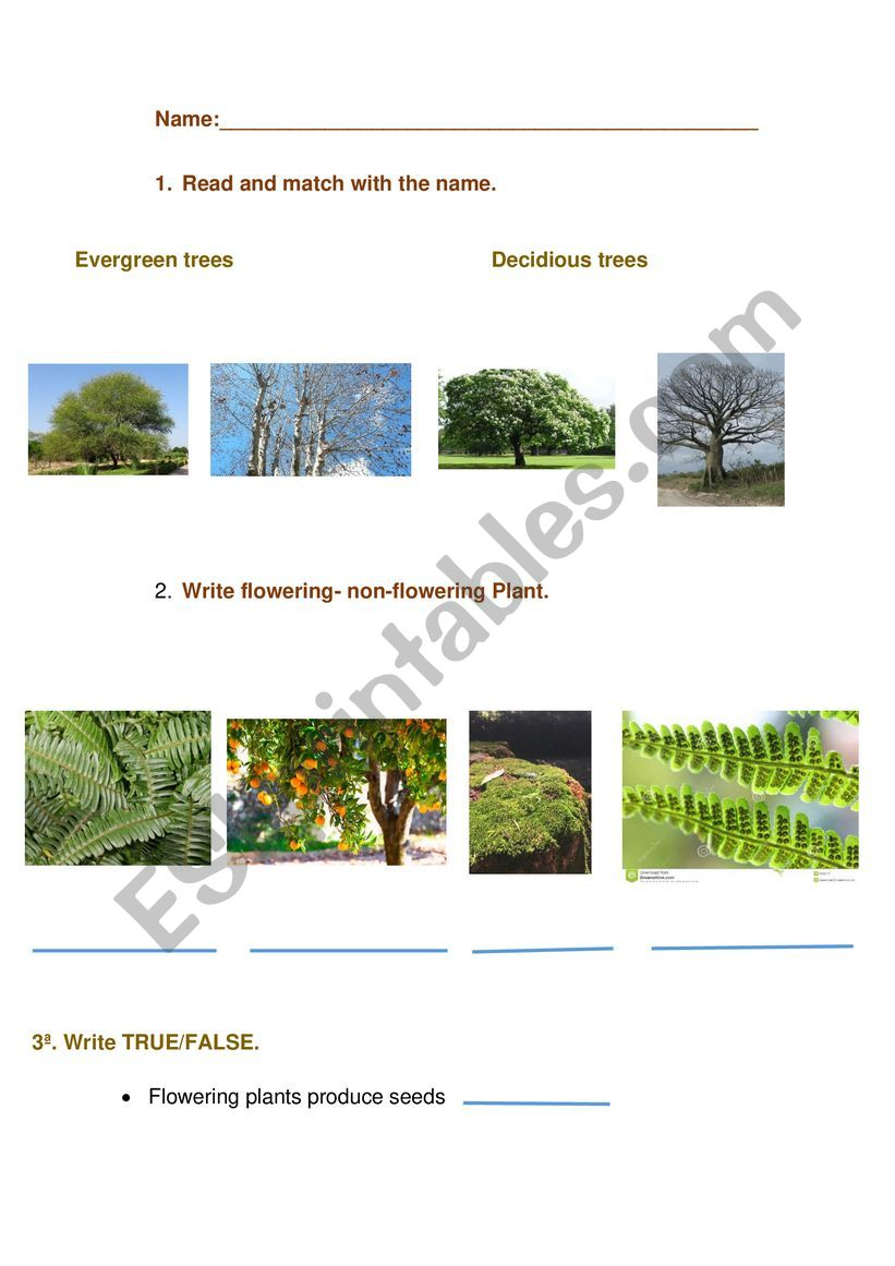 Plants and trees worksheet