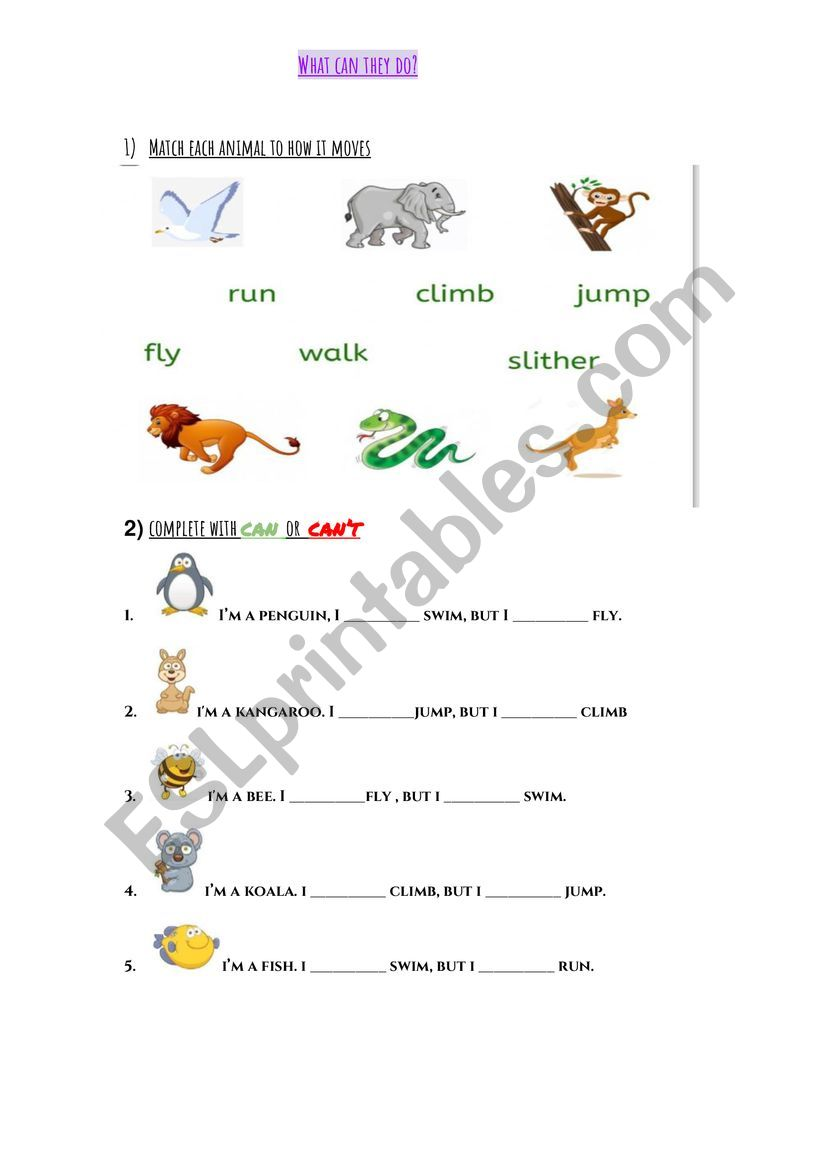 What can animals do? worksheet