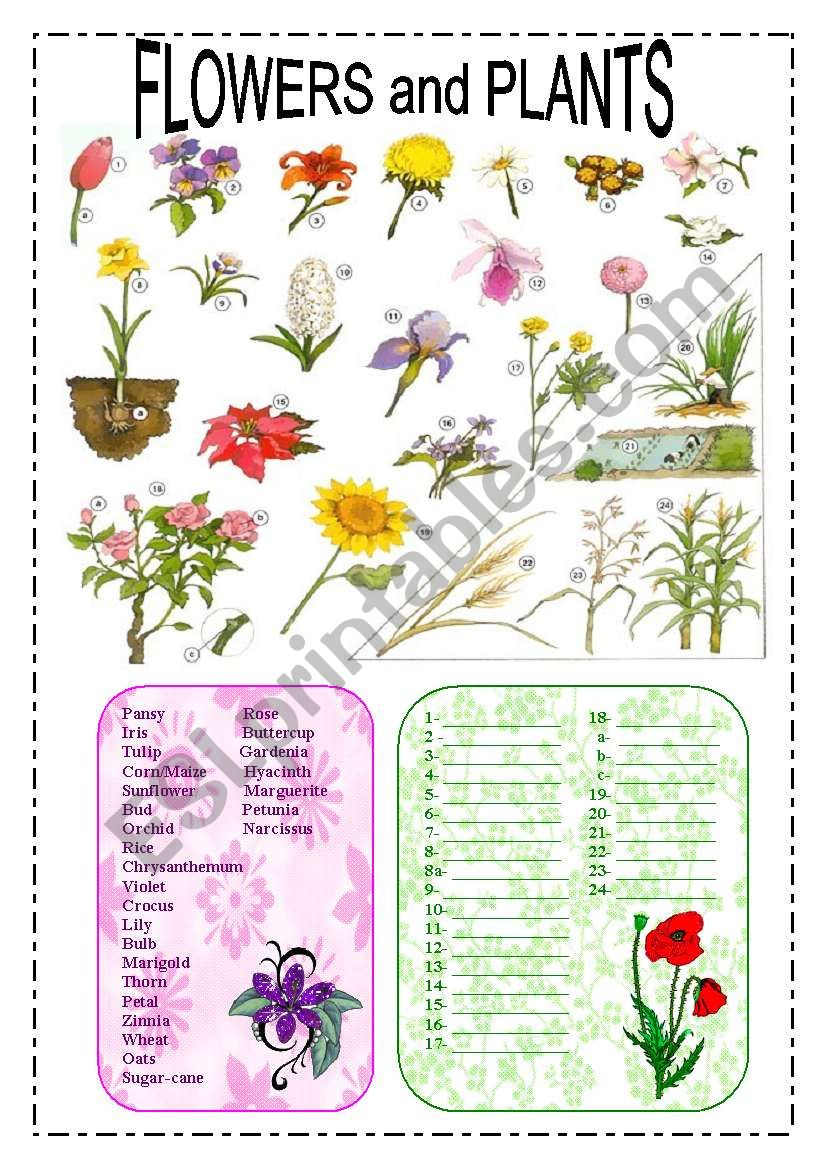 Flowers and plants worksheet