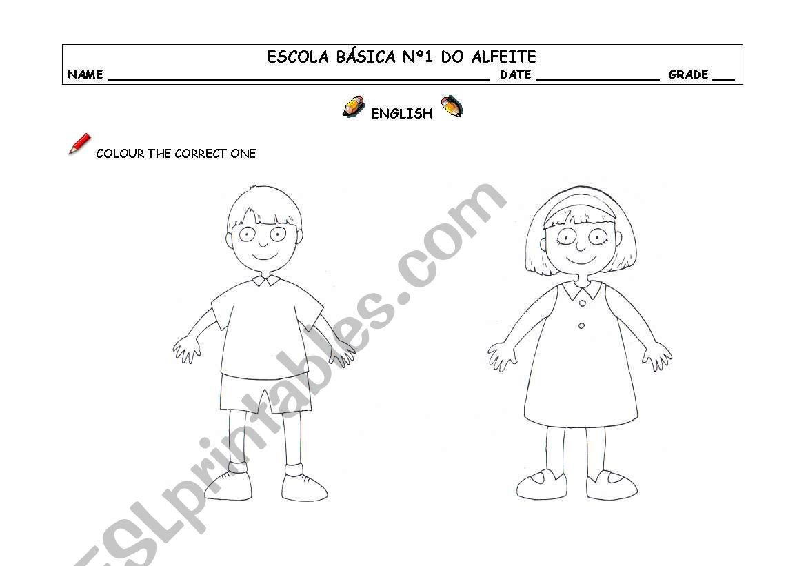 Boy / Girl worksheet