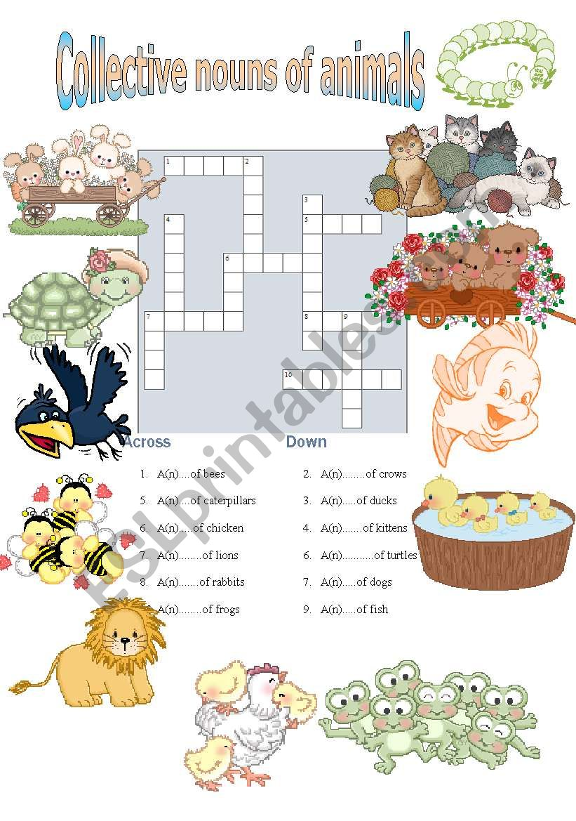 Collective nouns of animals worksheet