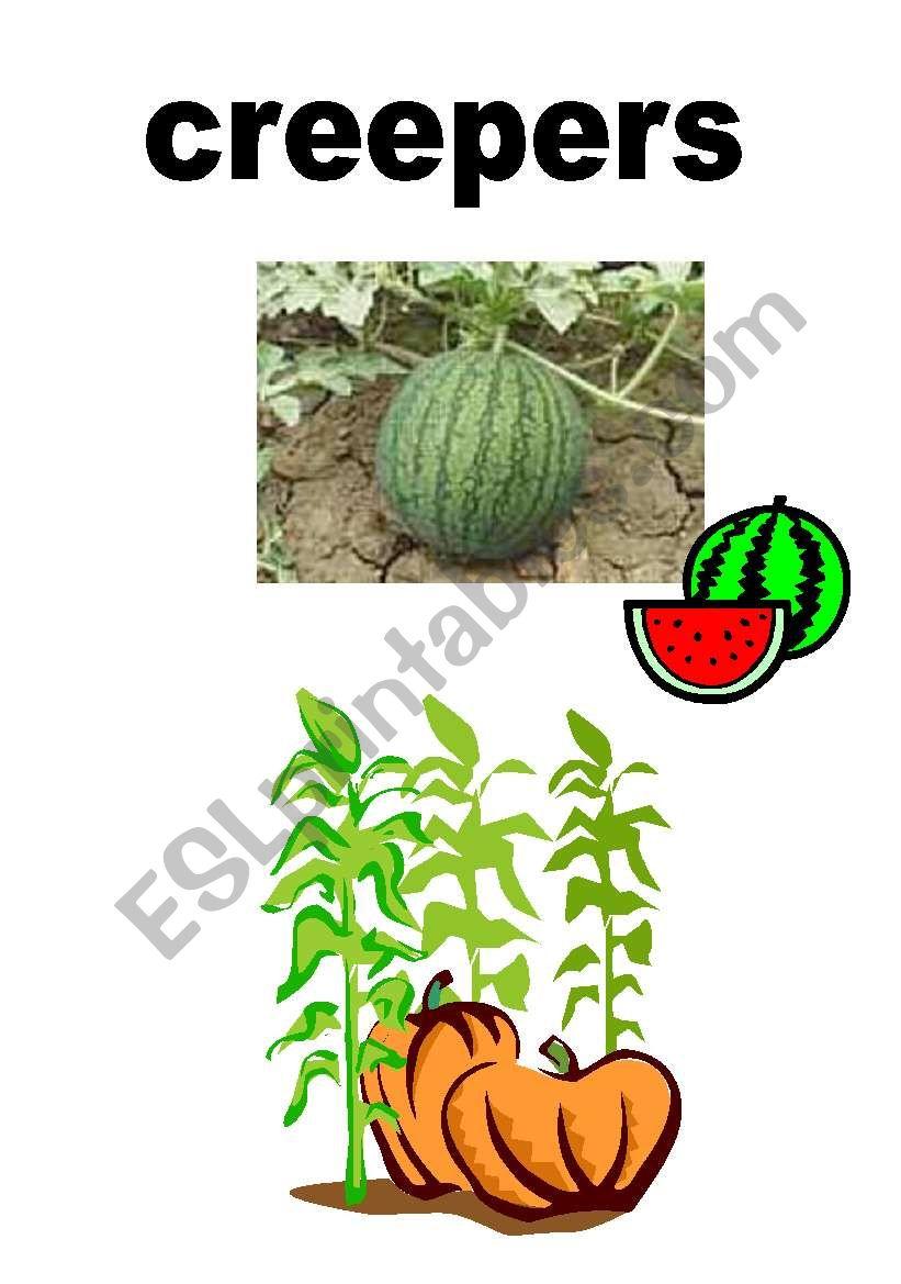 Vocab-Plants worksheet