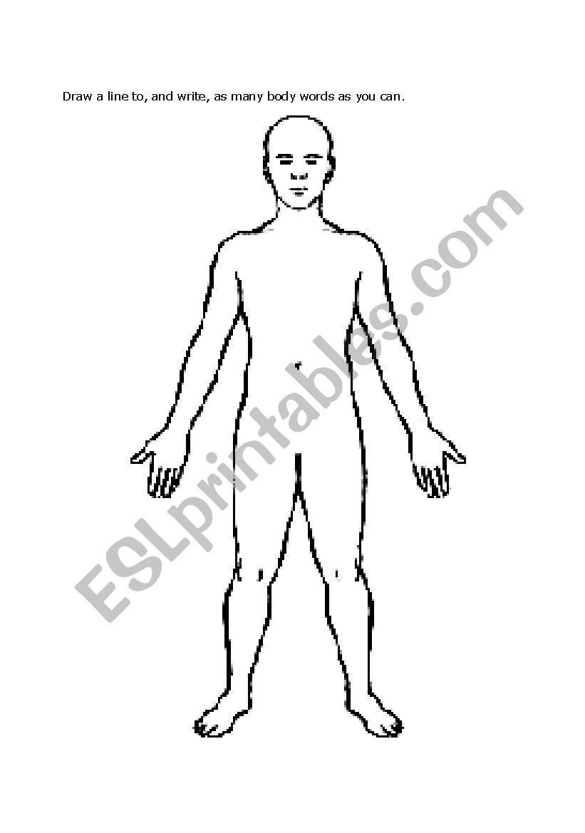 english worksheets body diagram Body Organs Diagram body diagram worksheet