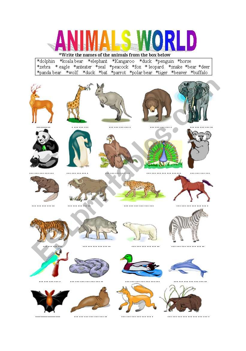 animals world esl worksheet by berat. Black Bedroom Furniture Sets. Home Design Ideas
