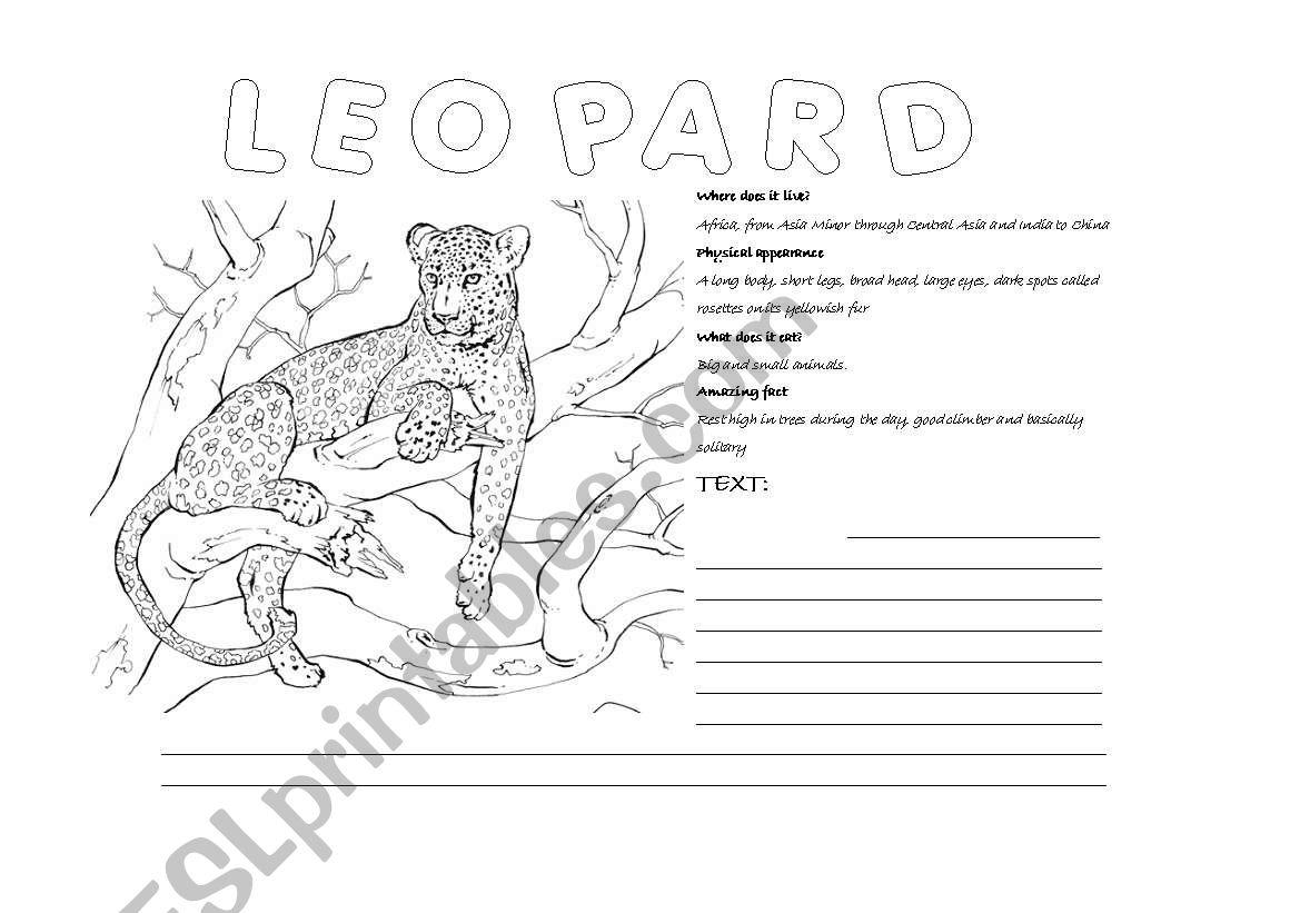 Animal worksheets worksheet