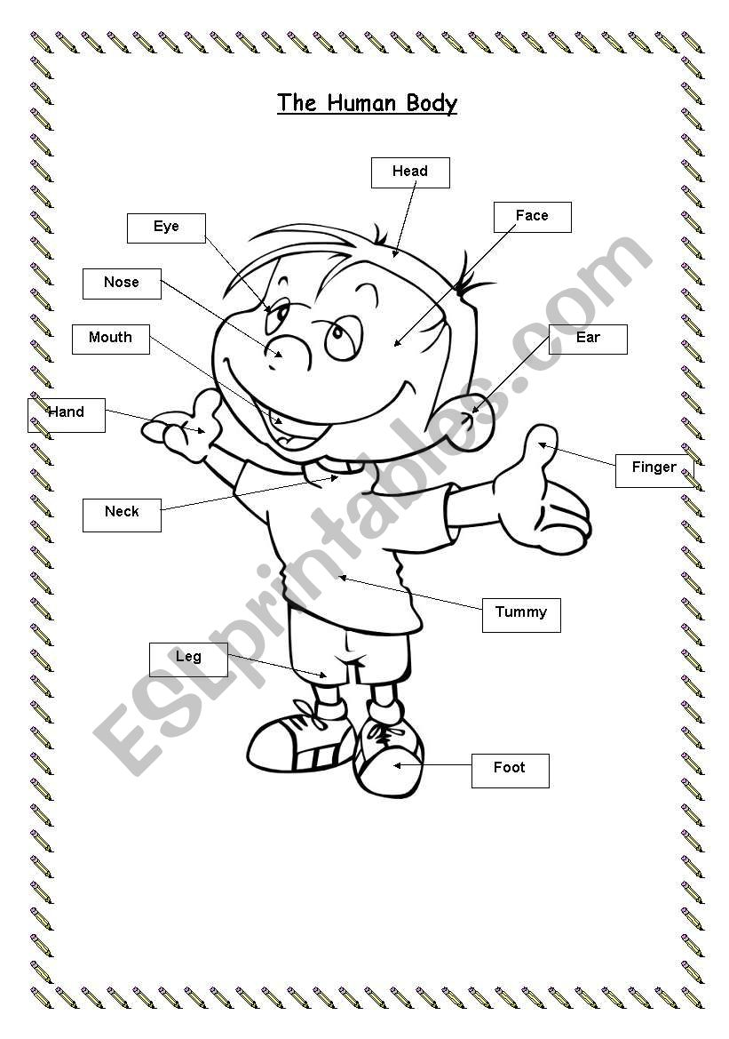 Parts of the body (flashcard & worksheet)