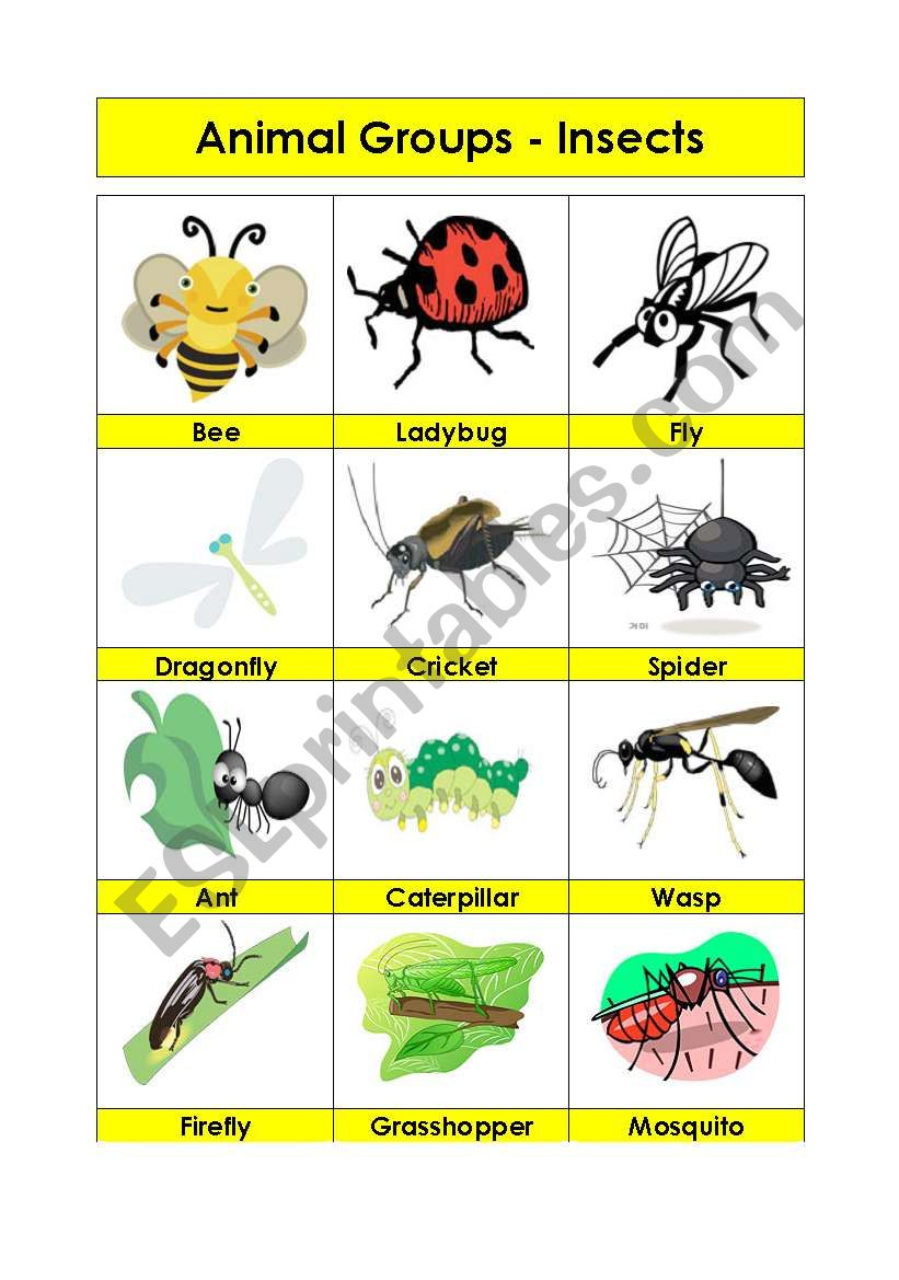 animal groups insects 2 5 esl worksheet by amna 107. Black Bedroom Furniture Sets. Home Design Ideas