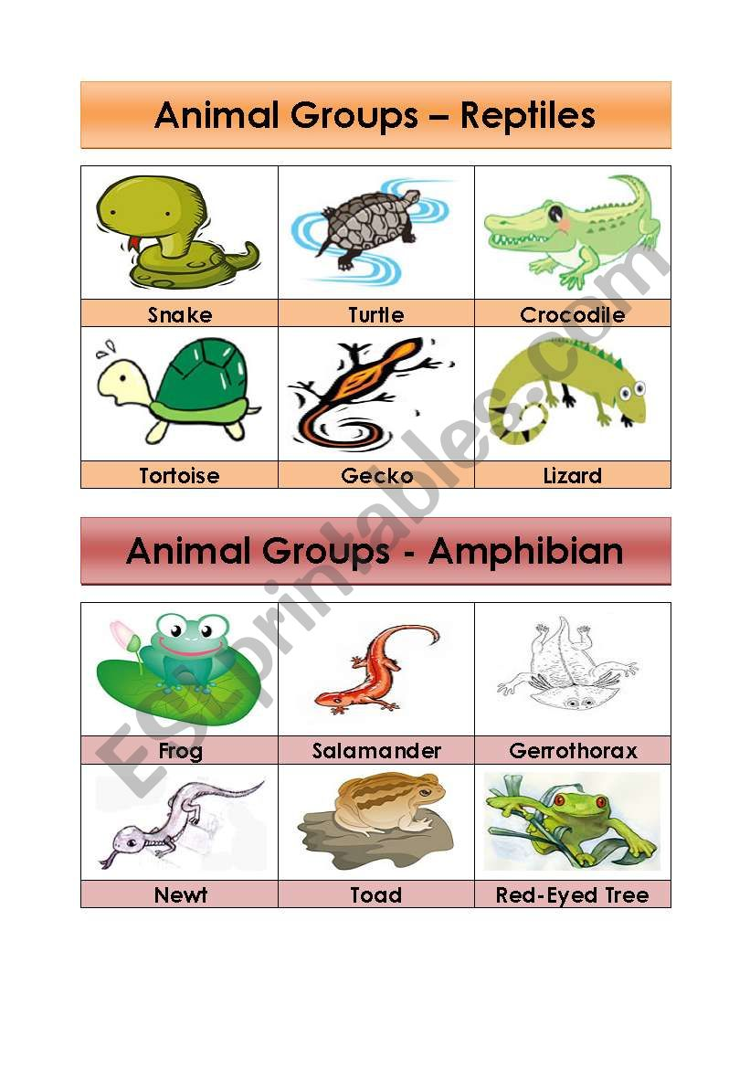 Animal Groups-Reptiles and Amphibians (5/5)