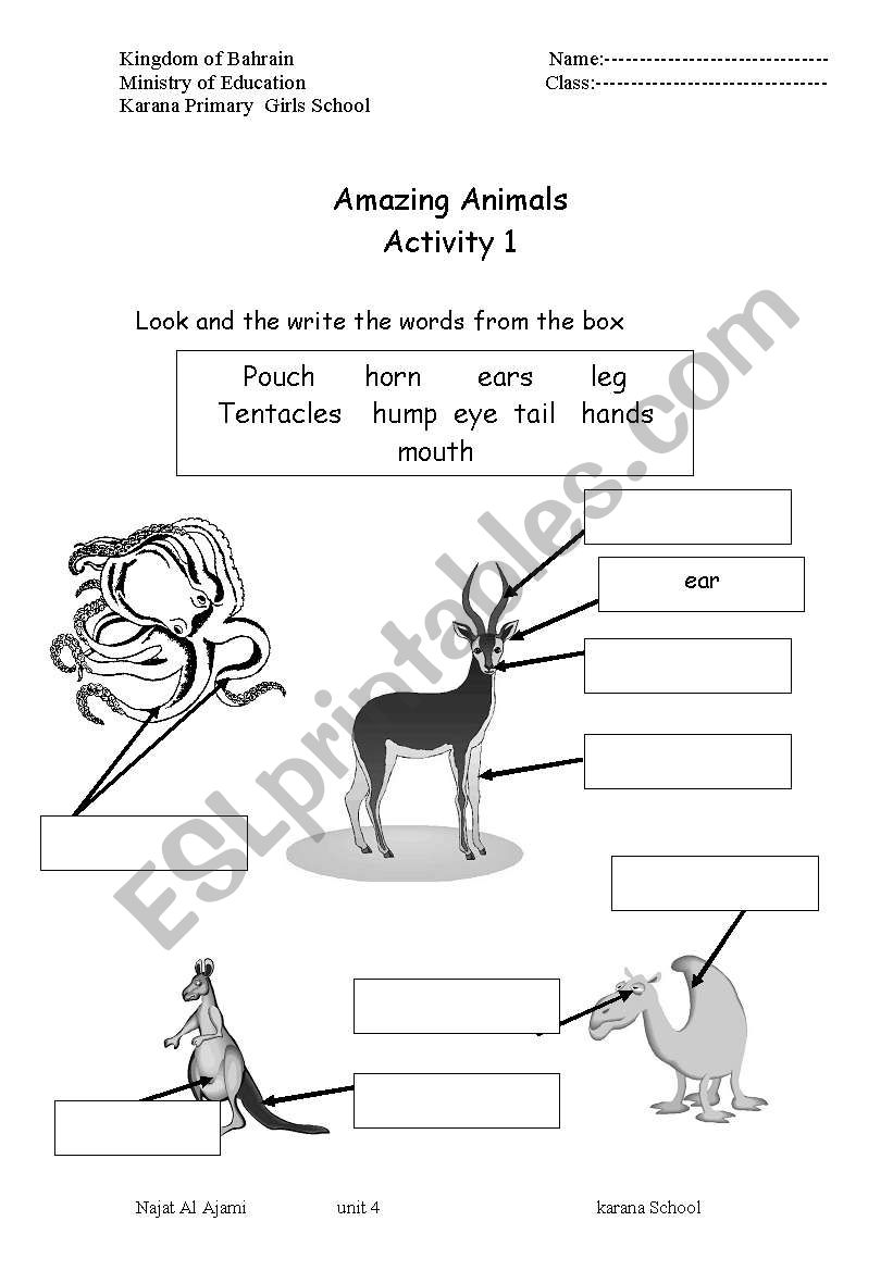 animals parts of the body esl worksheet by najyaa. Black Bedroom Furniture Sets. Home Design Ideas