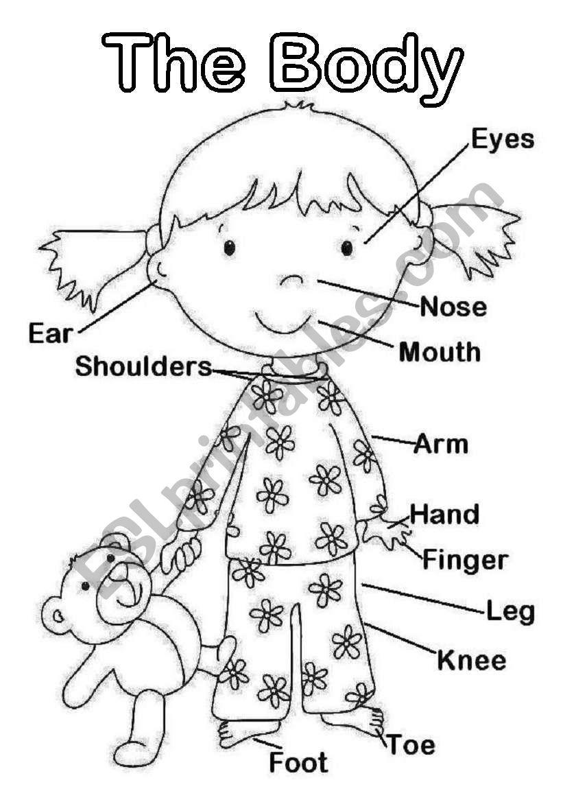 The Body worksheet