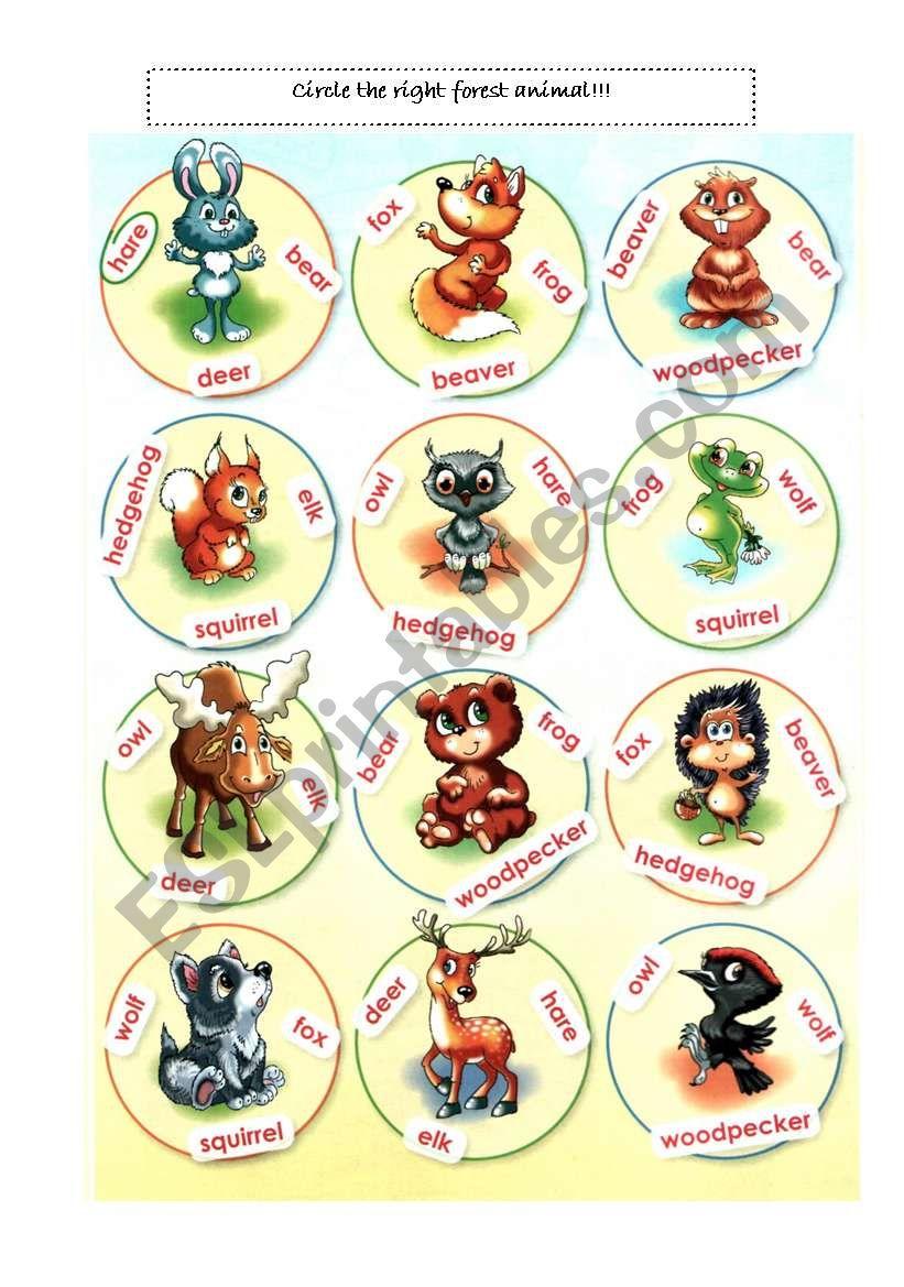 Forest animals - circle  worksheet