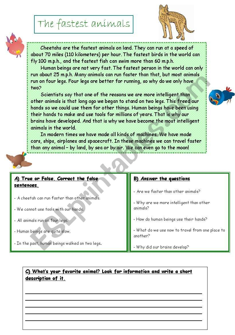 The fastest animals worksheet