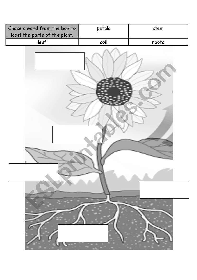 Label the Plant worksheet