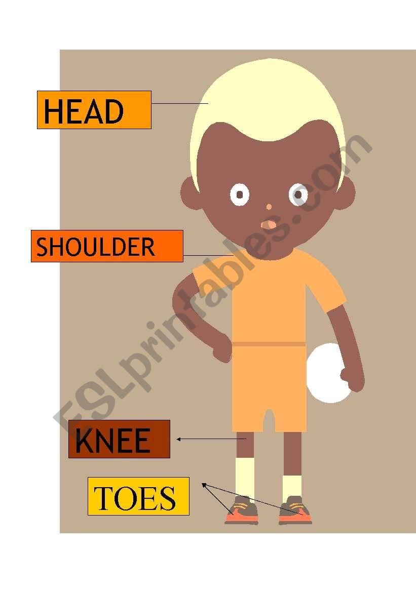 head-shoulder-knee-toes worksheet