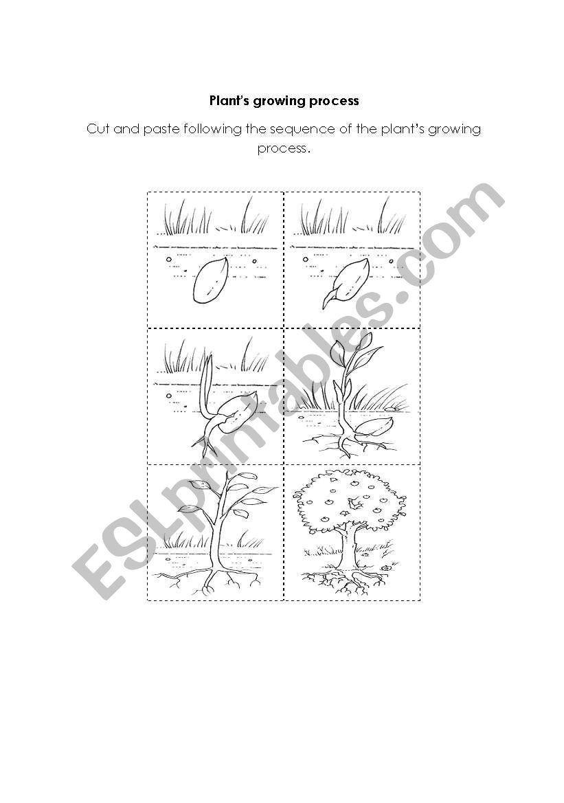 plant´s growing process worksheet