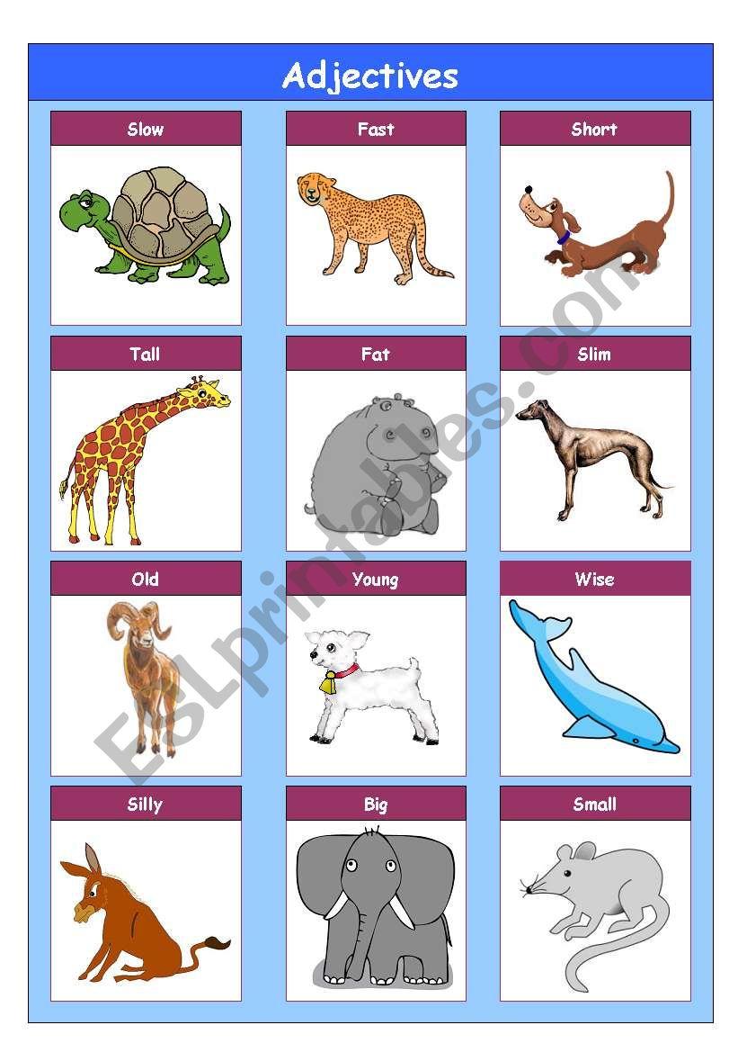 Adjetives worksheet
