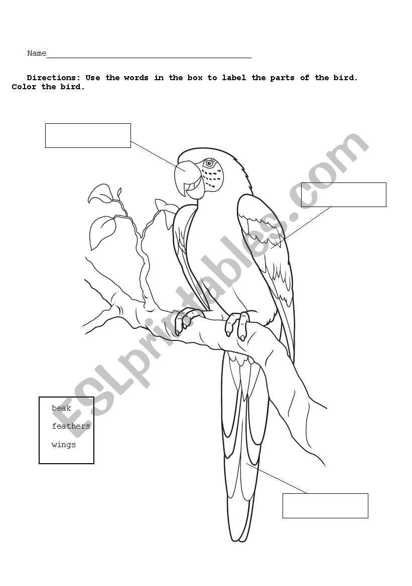parrot diagram worksheet