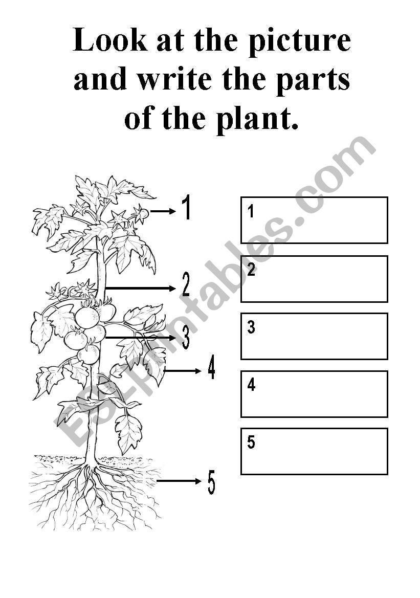 parts of a plant esl worksheet by kerem. Black Bedroom Furniture Sets. Home Design Ideas