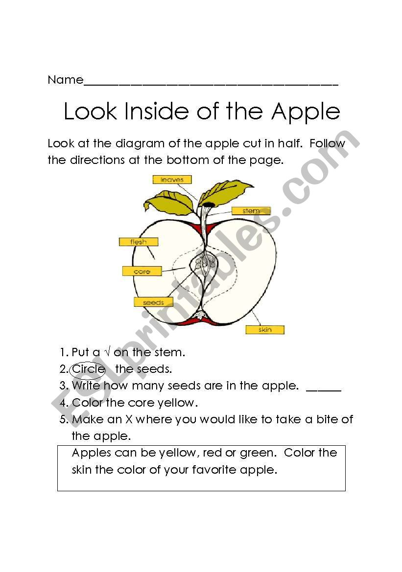 apple diagram worksheet