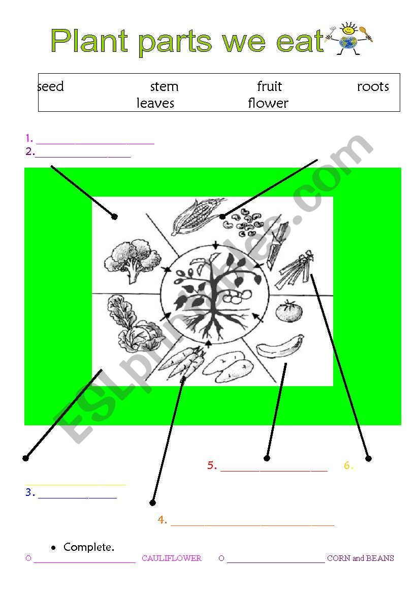 Free Parts of a Plant Activity Sheet – BookLife