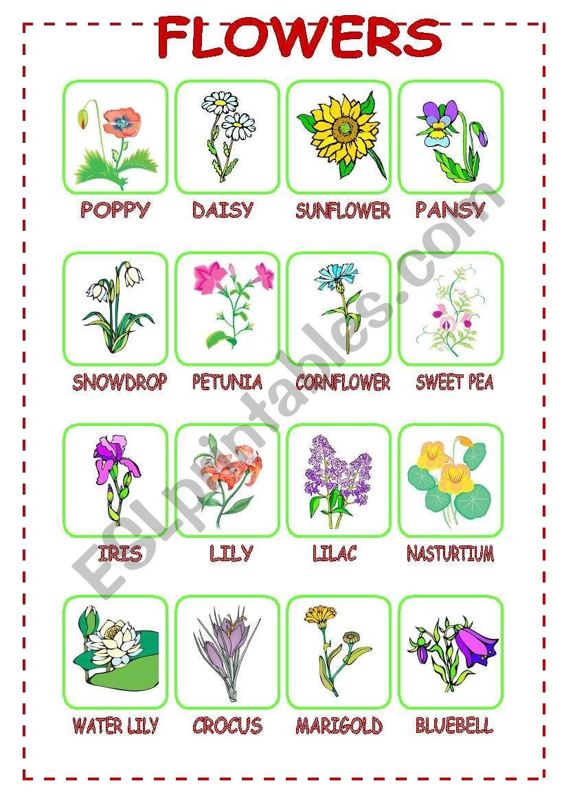Flowers (1/3) worksheet
