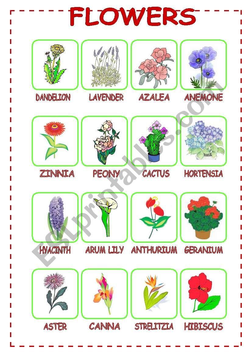 Flowers (3/3) worksheet