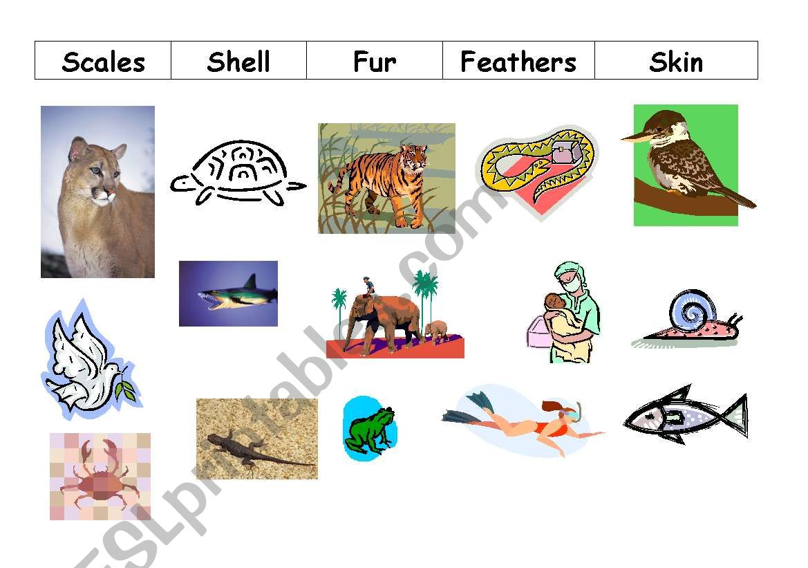From Seed To Plant X additionally Original as well A B D D Ef F further Animals Worksheet further F E E D D B C C A B. on animal coverings worksheet