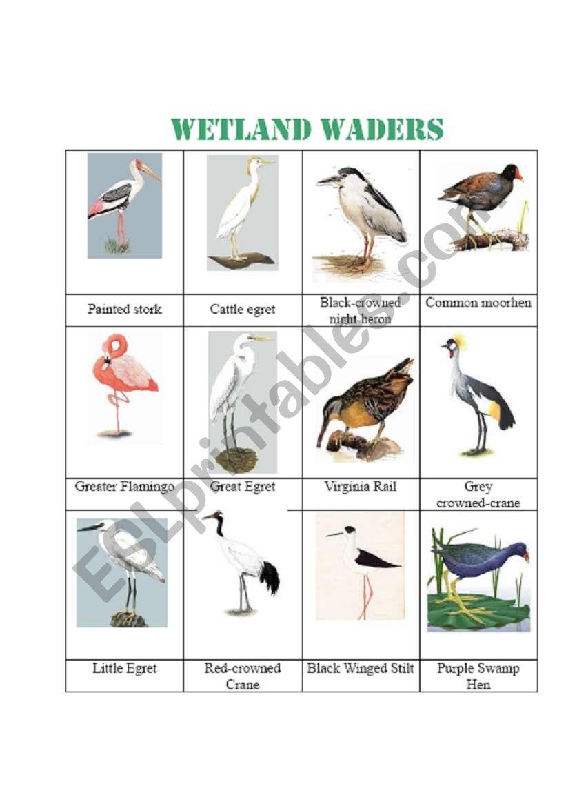 English worksheets: wetland waders, 12 birds name