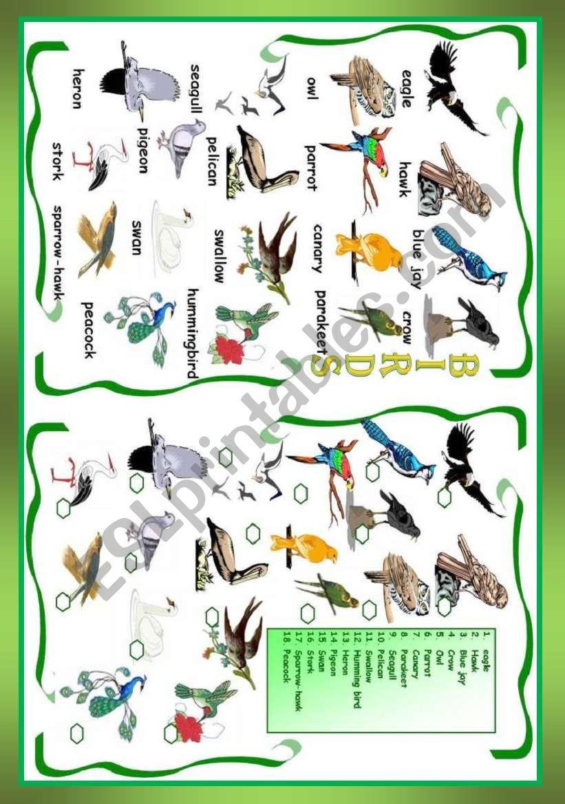 Birds worksheet