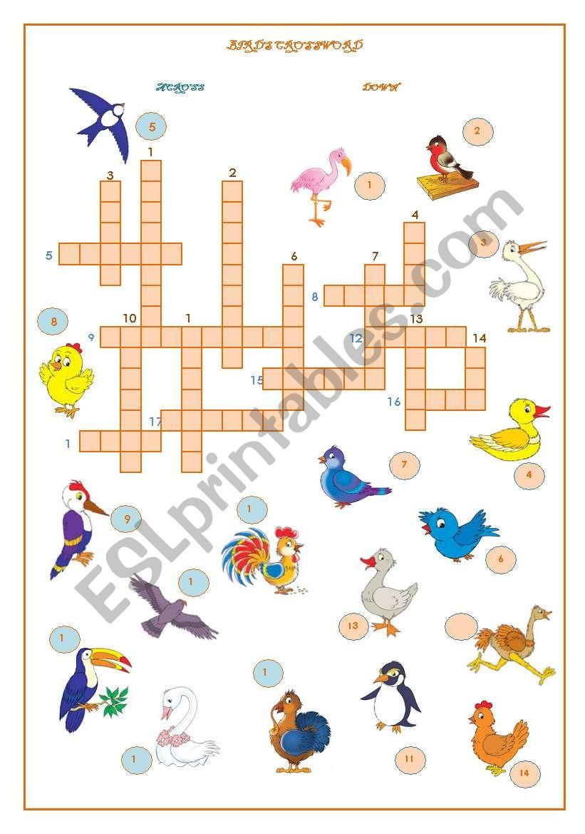 Birds Crossword worksheet