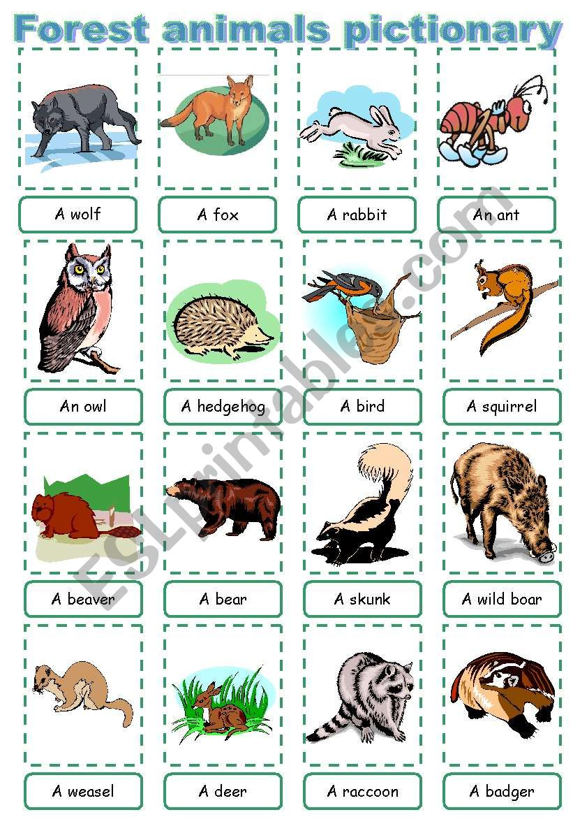 Forest animal pictionary worksheet