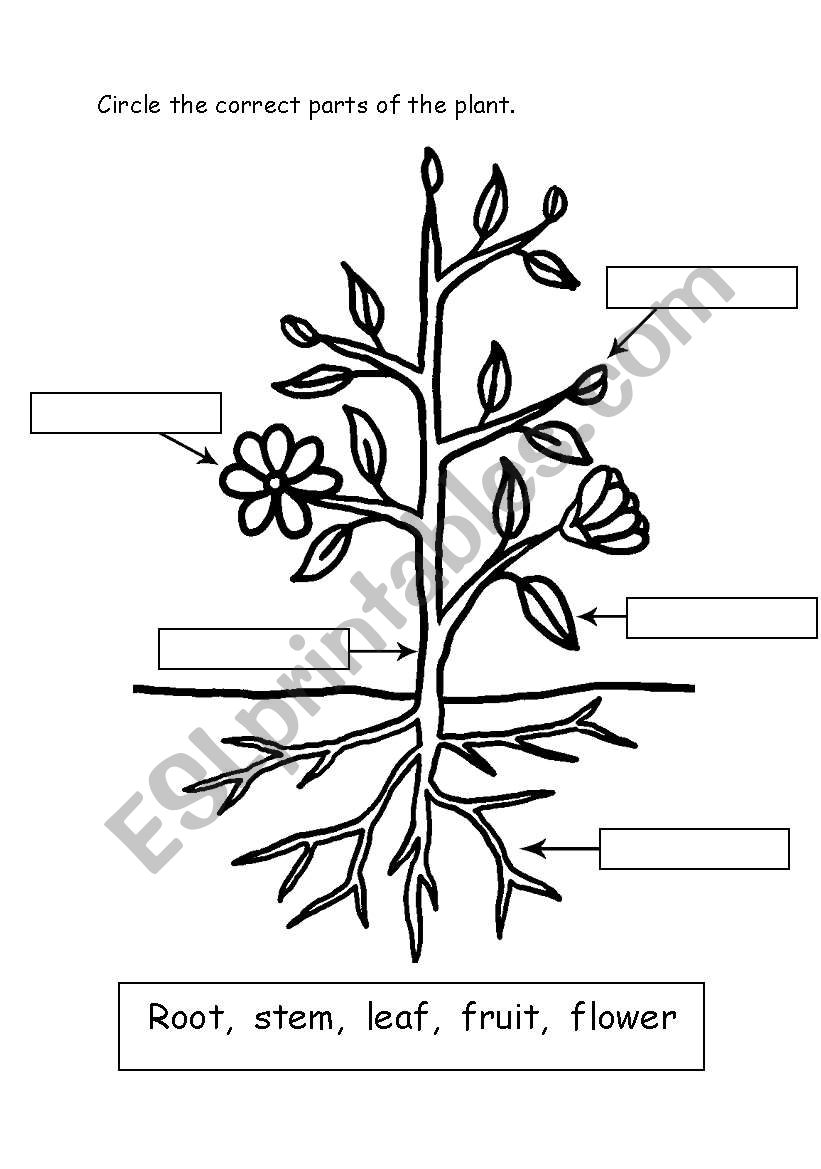 Parts of Plant - ESL worksheet by Miss J.Sabir