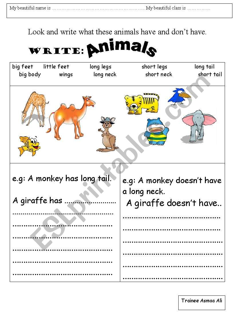 has and doesn´t have worksheet