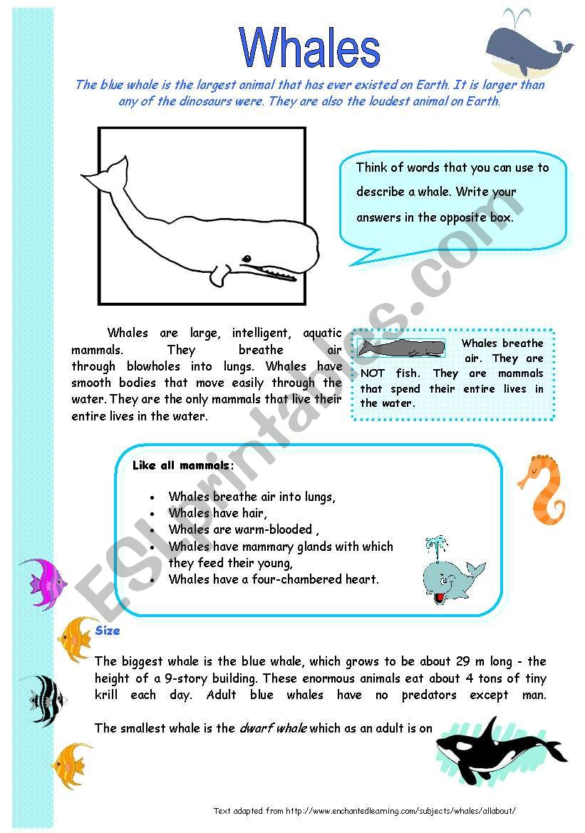 Whales worksheet