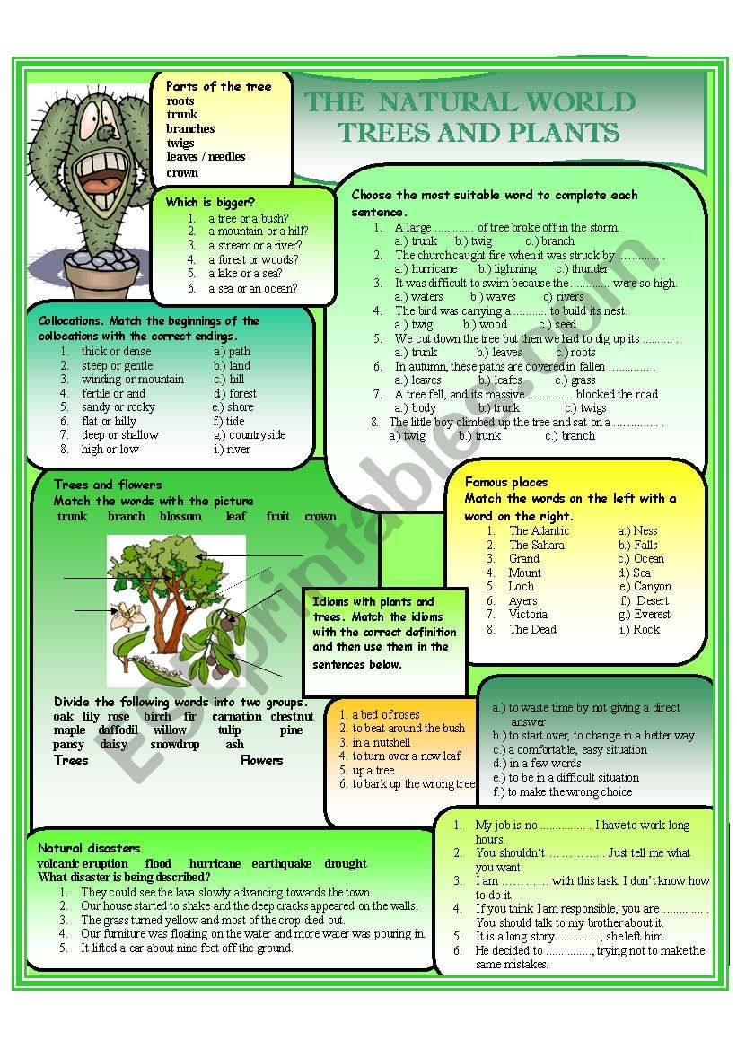The natural world - Plants and Trees - ESL worksheet by ciortea