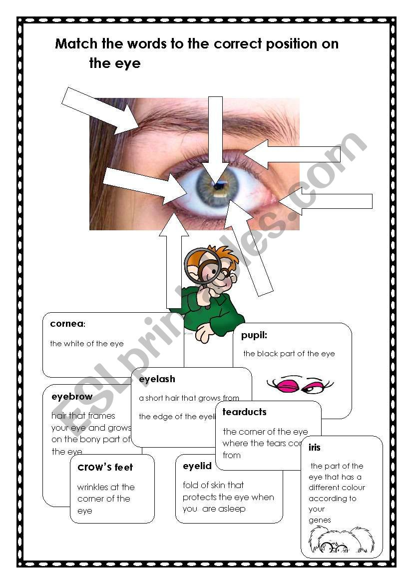 The Eyes have it! worksheet