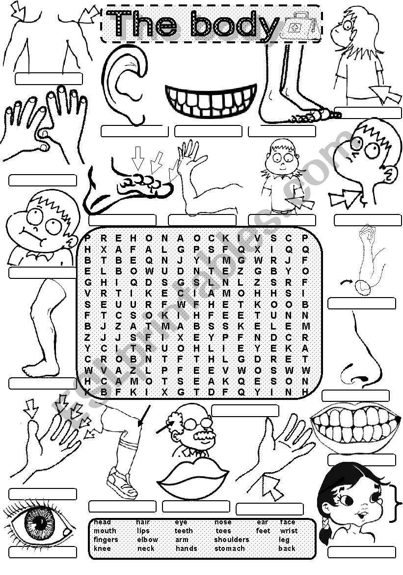 Wordsearch THE BODY - ESL worksheet by Im Lety