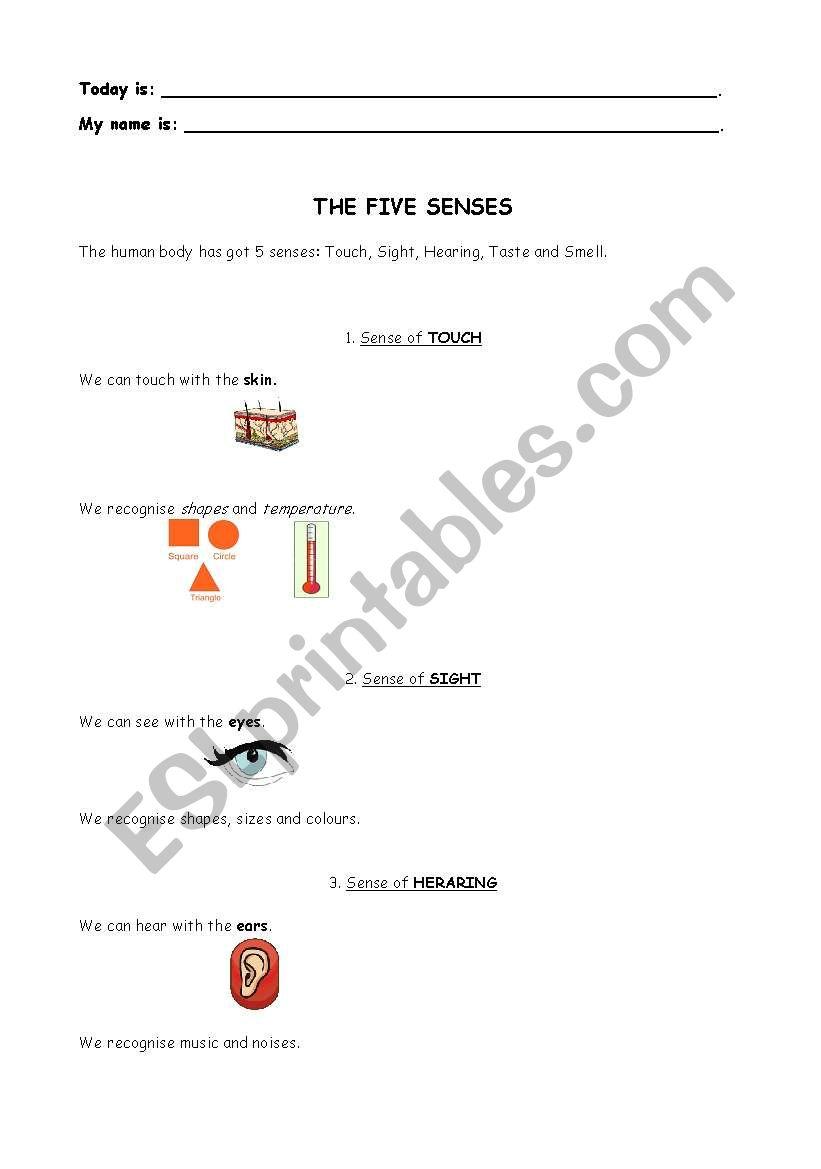 English Worksheets The Five Senses