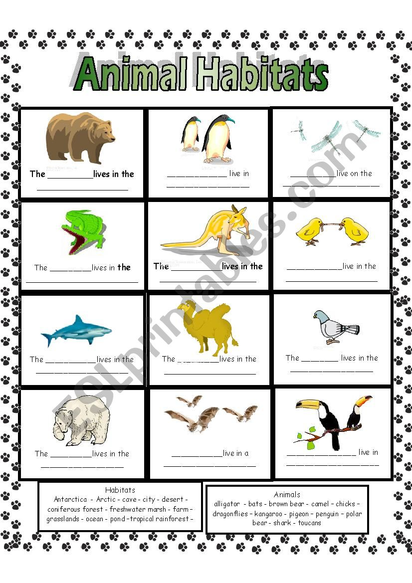 Animal Habitats Esl Worksheet By Anna P
