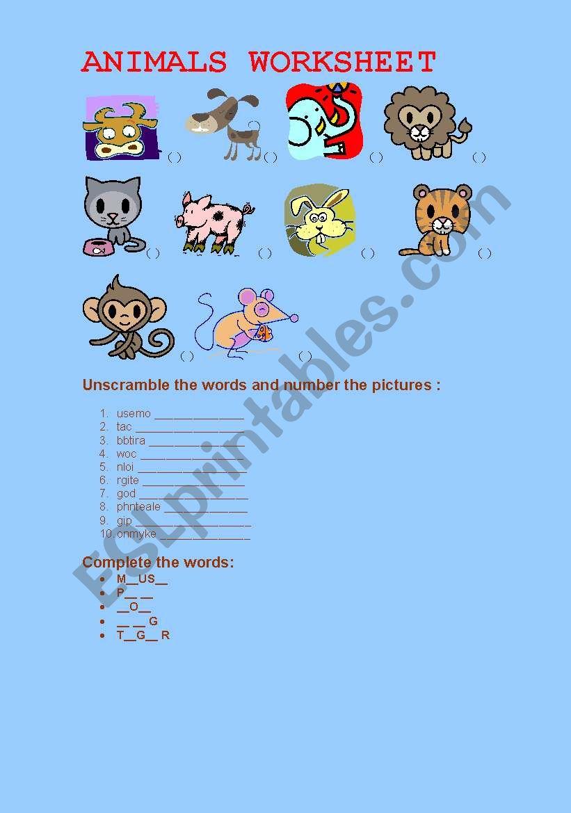 Animals worksheet worksheet