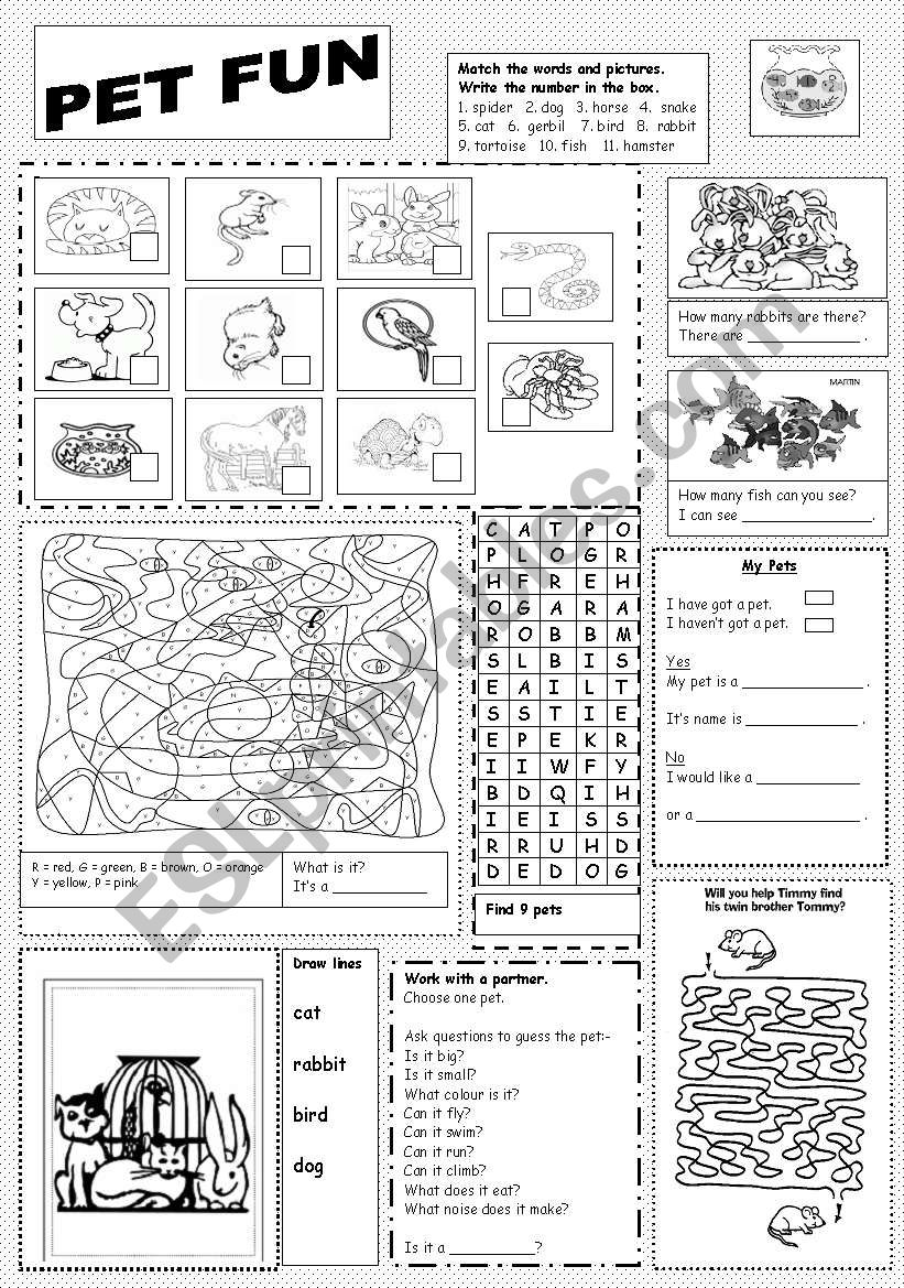 Pet Fun worksheet