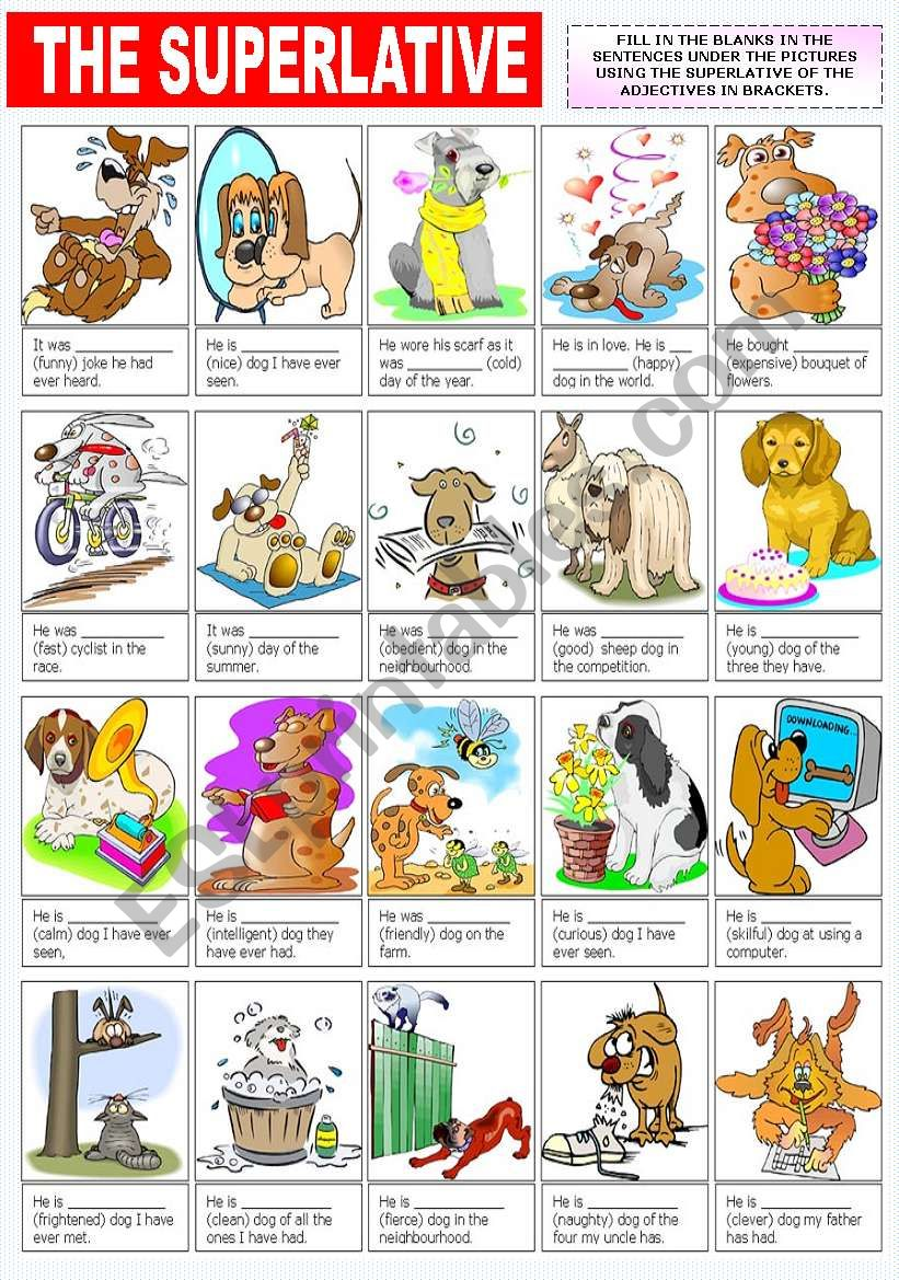 THE SUPERLATIVE OF ADJECTIVES(2)