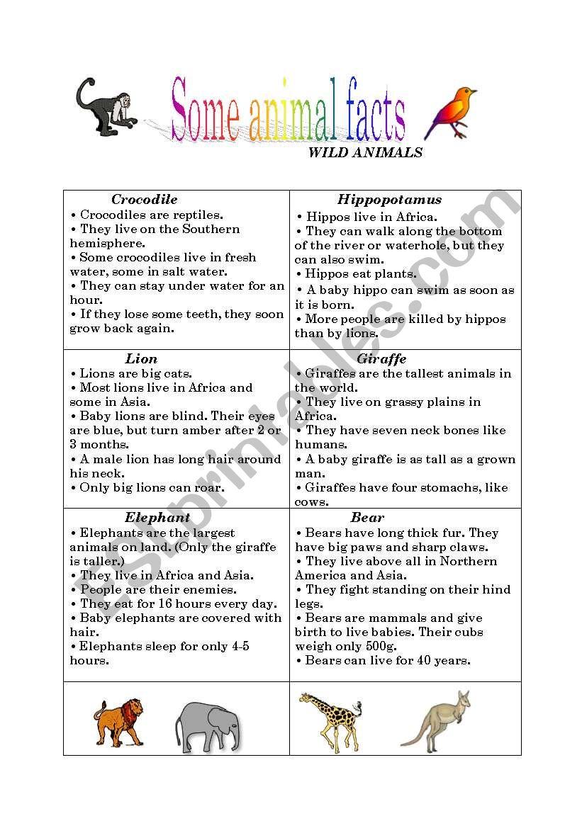 Animal facts worksheet