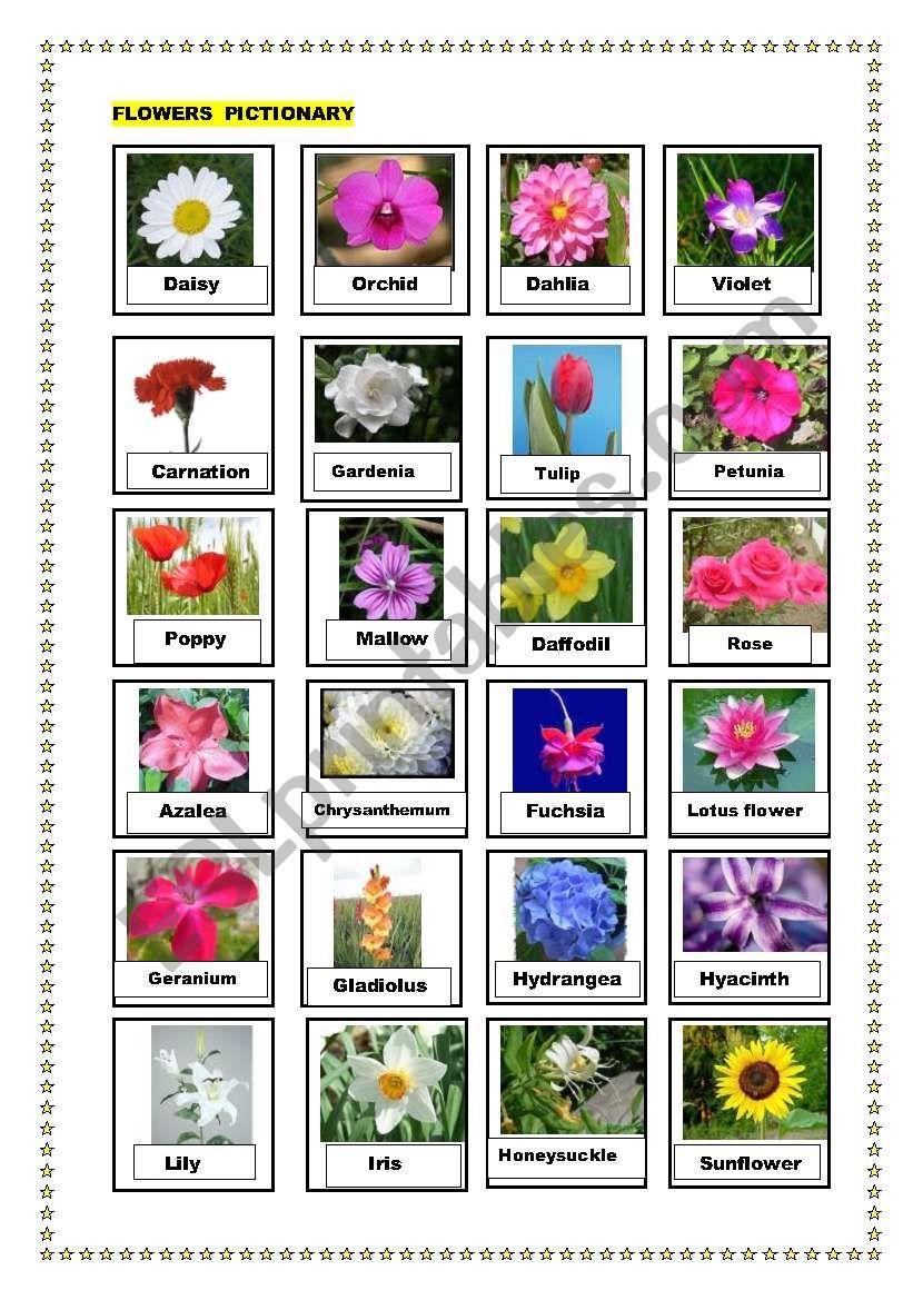 Flowers pictionary worksheet