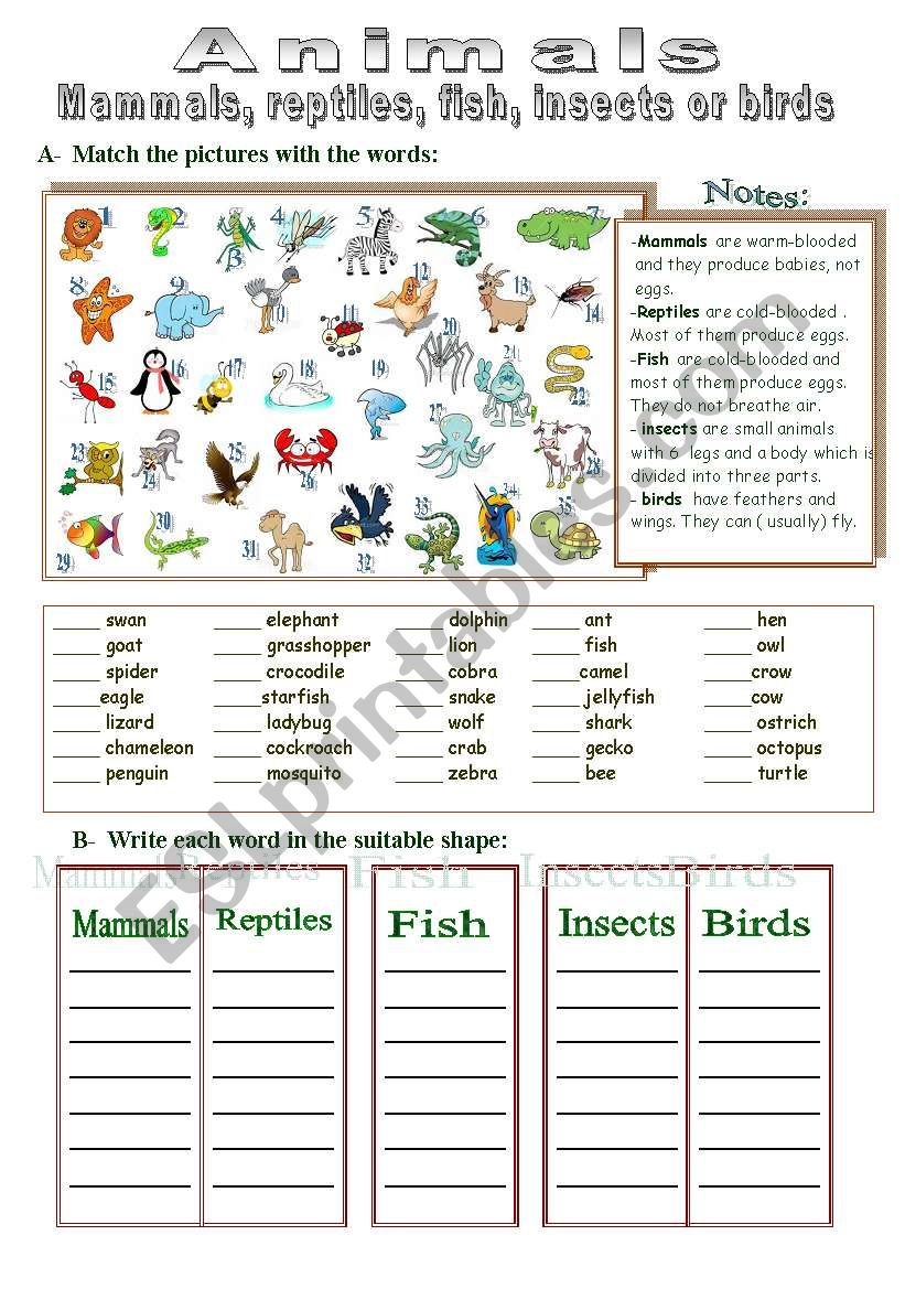 Mammals, reptiles, fish, insects or birds
